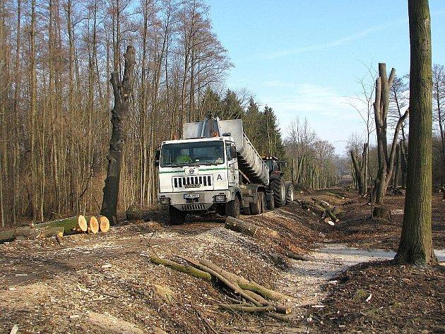 Zásah Lesů České republiky v lipové aleji čelil kritice.