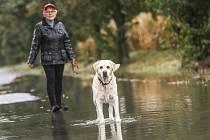 Zaplavená silnice mezi Vrdy a Vinicí ve čtvrtek 15. října 2020.