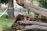 Spadla lípa u Lorce není jediný nebezpečný strom ve městě.