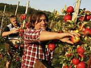 Meruňky ve Žlutavách letos nebudou, ale jablek bude hodně.