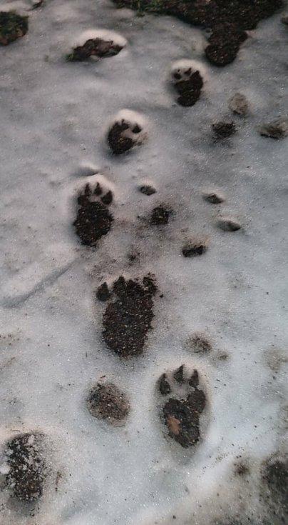 Vlk nebo medvěd? Tipněte si!