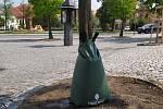 Lípy na Žižkově náměstí dostaly speciální vaky.