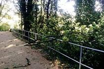 Větve a stromy popadané na Královské procházce v Kutné Hoře.