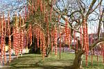 Základní škola Žižkov se červenými kraslicemi ozdobenou magnolií zapsala do České knihy rekordů.