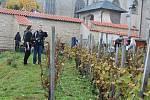 Slavnostní sklizeň vinice Pod Barborou v Kutné Hoře