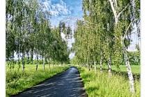 Kutnohorsko - alej u Nového rybníčka v Potěhách-