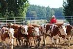 Z loňského ročníku Rodea na ranči Dalu v Kozohlodech.