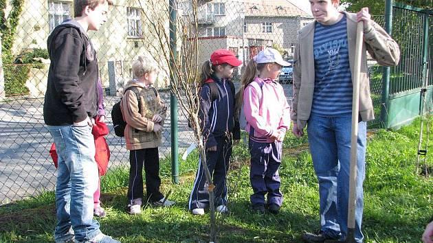 Deváťáci ze žižkovské základní školy vysadili tentokrát na zahradě buk.