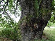 Strom v Čejkovicích nabíjí energií.