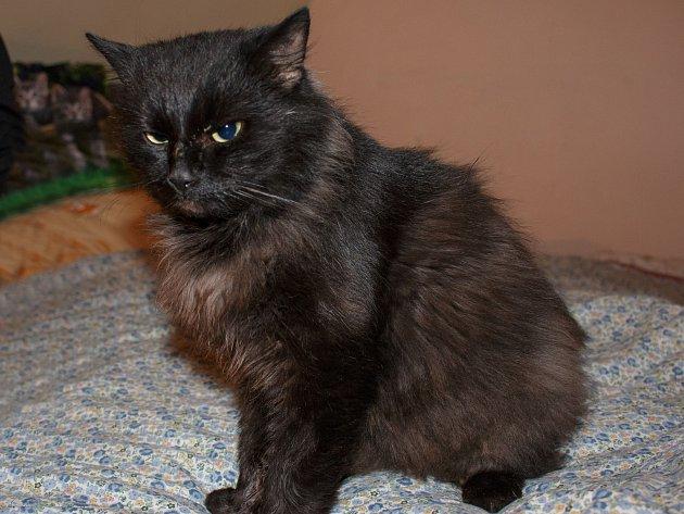 Kocour byl nalezen na kutnohorském sídlišti v Opletalově ulici 3. listopadu