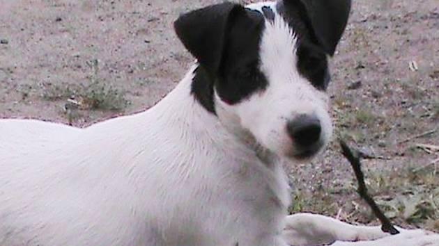 Osmiměsíční štěně Charlie  bylo odcizeno v pátek kolem poledne, majitelka nabízí nálezci vysokou odměnu