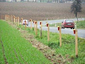 Pachové ohradníky u silnice I/2 mezi Přítoky a Miskovicemi