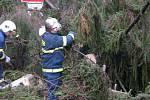 Odstraňování spadlých stromů u Červených Janovic.