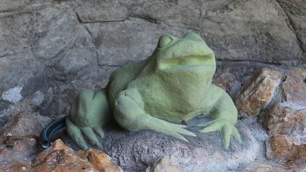 Žába opět sedí v Pacákových sadech, je výrazně světlejší
