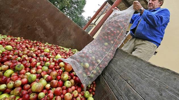 Výkupna padaných jablek.