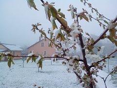 Ranní sněhové nadělení v pátek 28. dubna 2017 v Červených Janovicích.