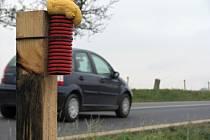 Pachové ohradníky u silnice I/2 mezi obcemi Přítoky a Miskovice.