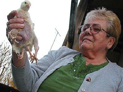 Eva Bartůňková s kuřetem se čtyřmi nohami, kterého pojmenovala Rychlonožka.