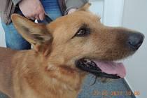 Kutnohorskému starostovi skočil do auta cizí pes