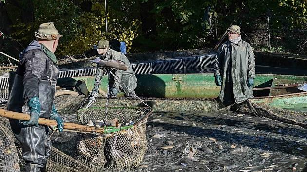 Výlov Vavřineckého rybníka se konal letos v komorním duchu.