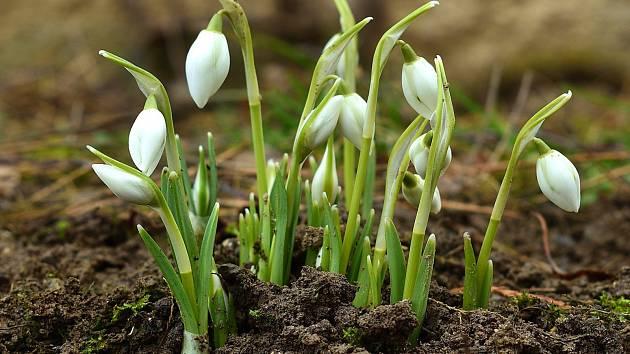 Výsledek obrázku pro obrázek jaro