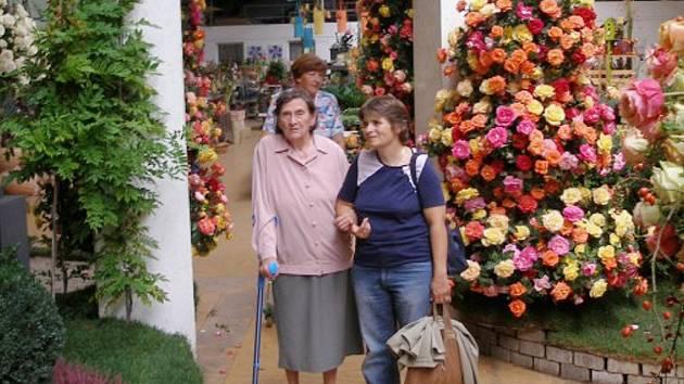 Z výstavy růží v zahradním centru Starkl na Kalabousku u Čáslavi.