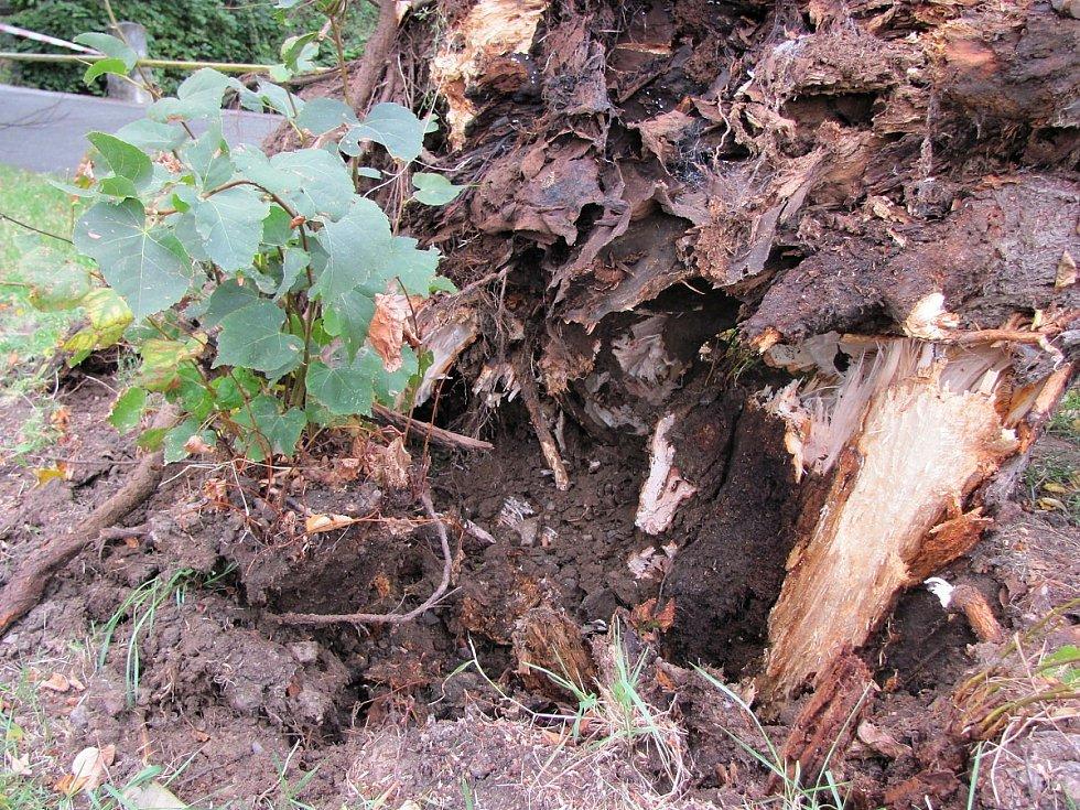 Nemocná lípa spadla přes chodník do rybníčku v ulici U Lorce v Kutné Hoře.