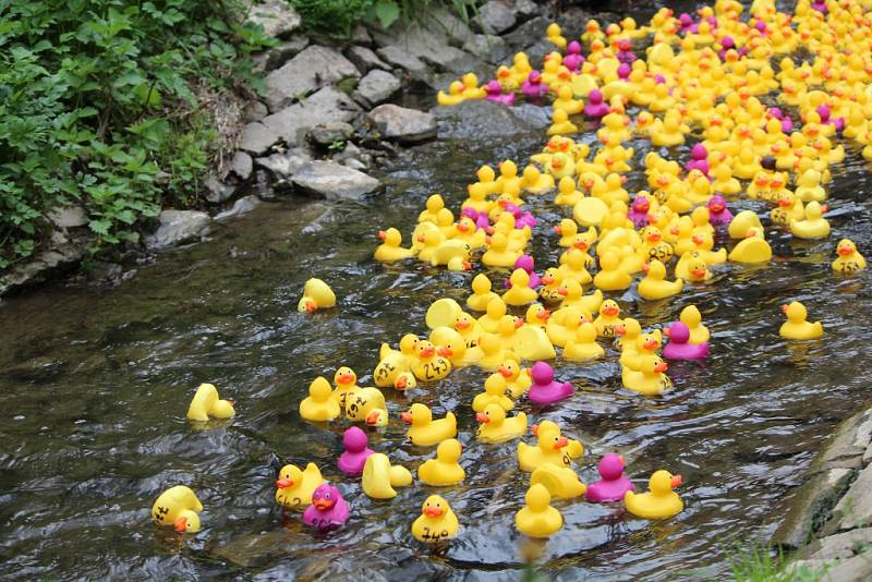 Žluté kachničky se vydaly na charitativní plavbu po Vrchlici.