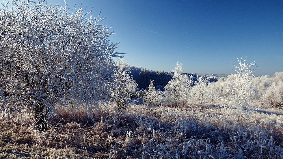 Zimní příroda zachycena objektivem Martina Suka.