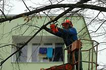 Kácení lípy v Puškinské ulici v Kutné Hoře.