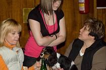 Z klubové výstavy psího plemena Cavalier King Charles Spaniel v OK clubu Lorec v Kutné Hoře.