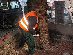 Kácení vánočního stromu v Čelakovského ulici v Kutné Hoře.