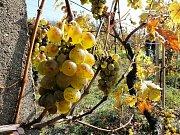 Ilustrační foto: Víno z kutnohorské vinice