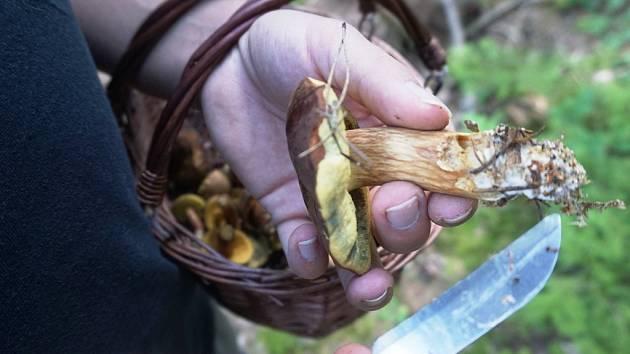 Na Kutnohorsku rostou houby