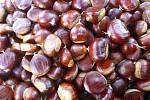 Lidé si mohou upéct jedlé kaštany nasbírané přímo v Železných horách.