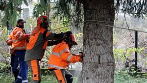 Kácení, transport a instalace vánočního stromu v Kutné Hoře