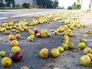 Jablka napadaná podél silnice v Žehušicích.
