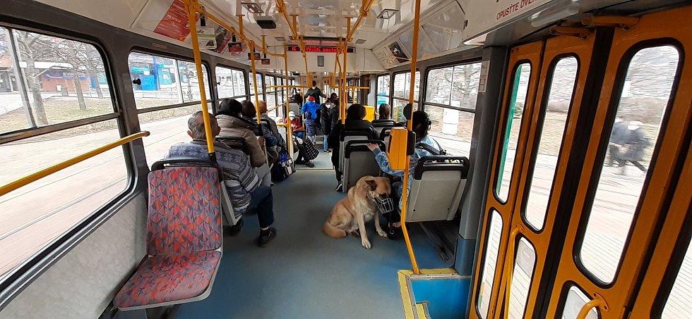 Cesta tramvaji 11 do Jablonce a zpátky.