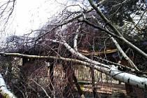 Poškozené stromy vichřicí Sabine odstraněny, parky zpřístupněny.