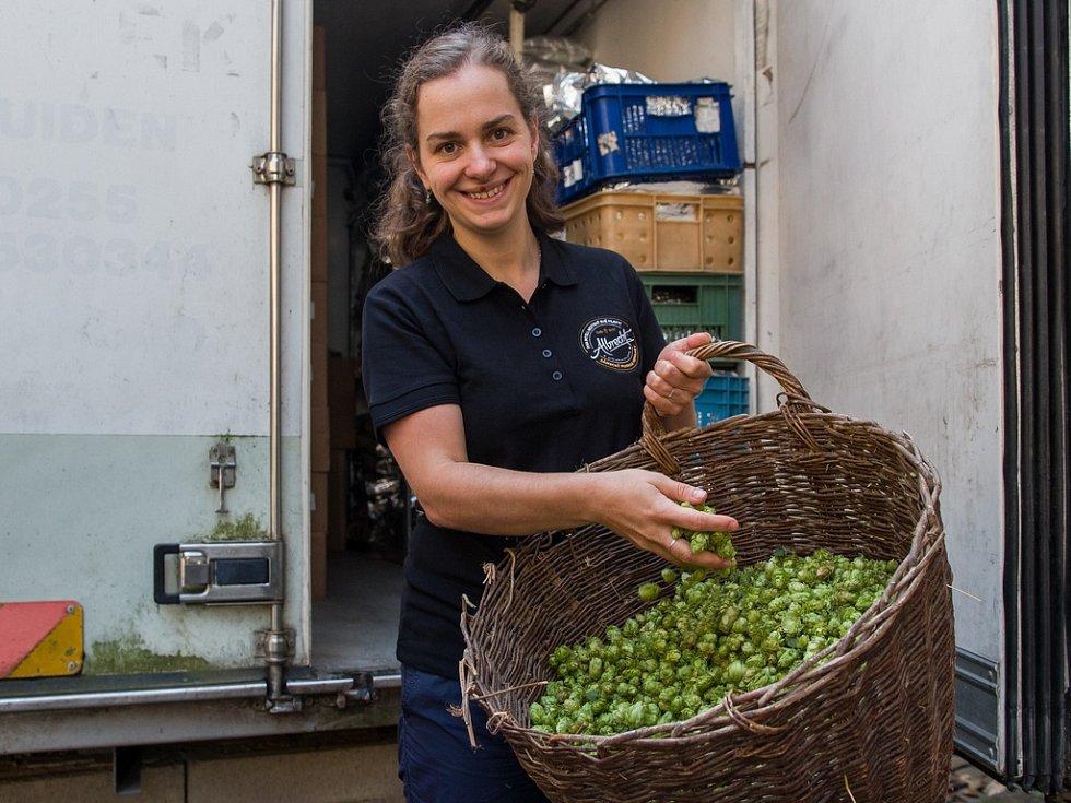 V zámeckém pivovaru Frýdlant vařili poprvé v historii pivo z úrody chmele vypěstované na Střední škole hospodářské a lesnické ve Frýdlantě. Na snímku z 31. srpna je laborant a vařič Alena Marie Dančová.