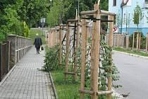 V polovině června neznámý vandal polámal okolo deseti mladých lip v aleji v Dvořákově ulici za muzeem. Celkově bylo poškozeno patnáct stromů a škoda přesáhla sto tisíc korun. Pachateli hrozí za poškození cizí věci až rok vězení.