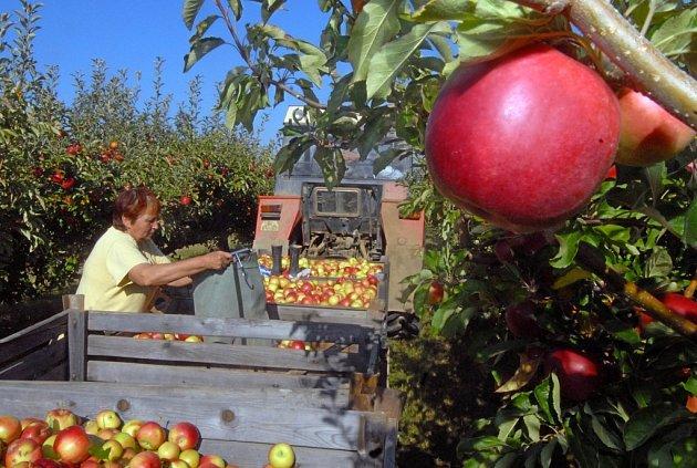 ZEMĚDELCE DUSÍ LEVNÉ PRODUKTY Z CIZINY. Tuzemským zemědělcům by pomohlo, kdyby český zákazník kupoval ovoce, zeleninu, maso, mléko a další produkty především z domácí výroby.