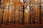 Podzim v lese.