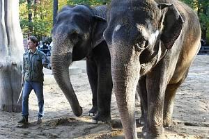 Zdravotní stav 47leté Gaurí ( na snímku vpravo) se natolik zhoršil, že  chovatelé rozhodli o eutanazii.