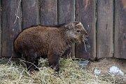Čtyři mláďata takina čínského se narodila na přelomu února a března v Liberecké zoologické zahradě. Od roku 2002 se liberecké zoologické zahradě ošetřovatelům podařilo odchovat již 39 mláďat. Snímek je z 21. března.