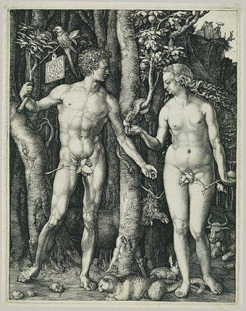 ADAM AEVA (1504). Na Dürerově tisku Adam a Eva mají postavy pupíky, což je zajímavé, protože Adama stvořil Bůh a Eva se narodila zžebra, takže by neměli být propojeni smatkou pupeční šňůrou.