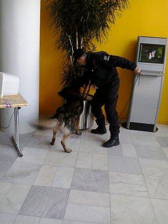 Policejní pes Barča prohledává vestibul Krajského úřadu Libereckého kraje.