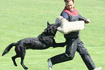 Při jedné ze součástí závodu museli psi zvládnout zadržet pachatele, kterého dobíhali přes velké prostranství.