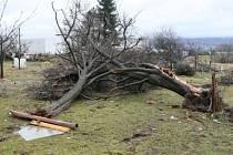V Liberci v sobotu dopoledne řádil orkán Ema. Hasiči odstraňovali stromy na silnicích a pomáhali likvidovat škody na domech v Puškunově ulici.