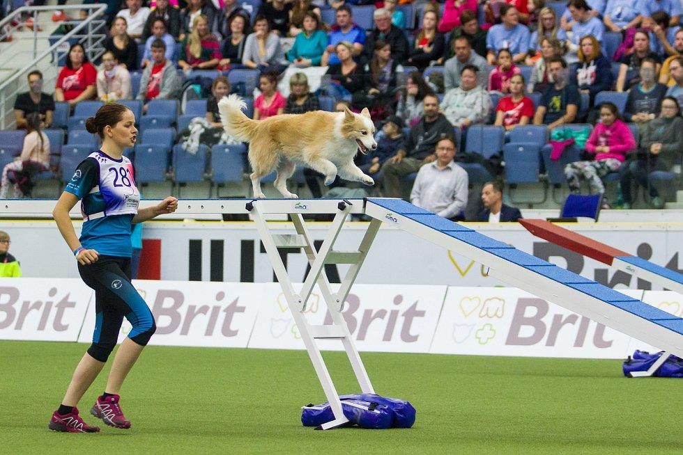 Poslední den Mistrovství světa v agility proběhl 8. října v Home Credit areně v Liberci. Na snímku je Cynthia Bossio se psem Melly při disciplíně agility jednotlivců se středně velkými psy.